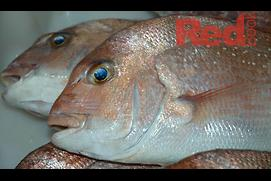 South Australia floats three-year ban on snapper f...